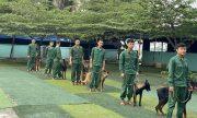Trường huấn luyện chó chuyên nghiệp số 1 tại Tphcm